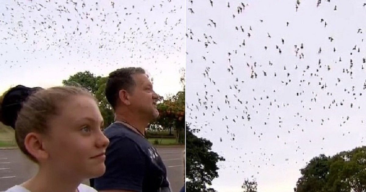 b3 1.jpg?resize=412,232 - Les résidents d'une petite ville d'Australie envahis par 300 000 chauves-souris