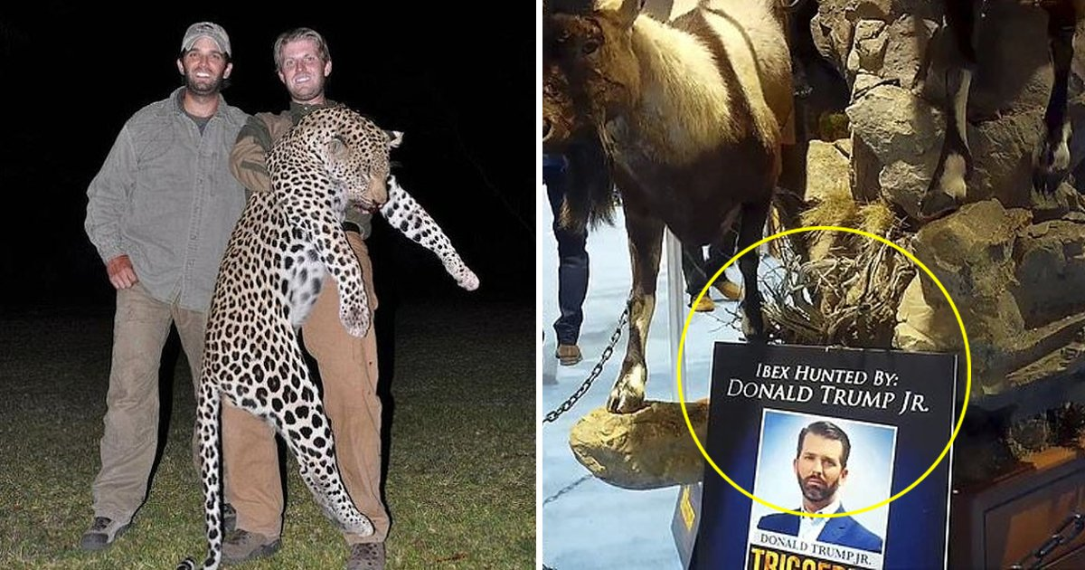bbdfaf.jpg?resize=1200,630 - Donald Trump Jr. Receives Permit For Hunting Alaskan Grizzly Bears In The Northwest Region Of Alaska