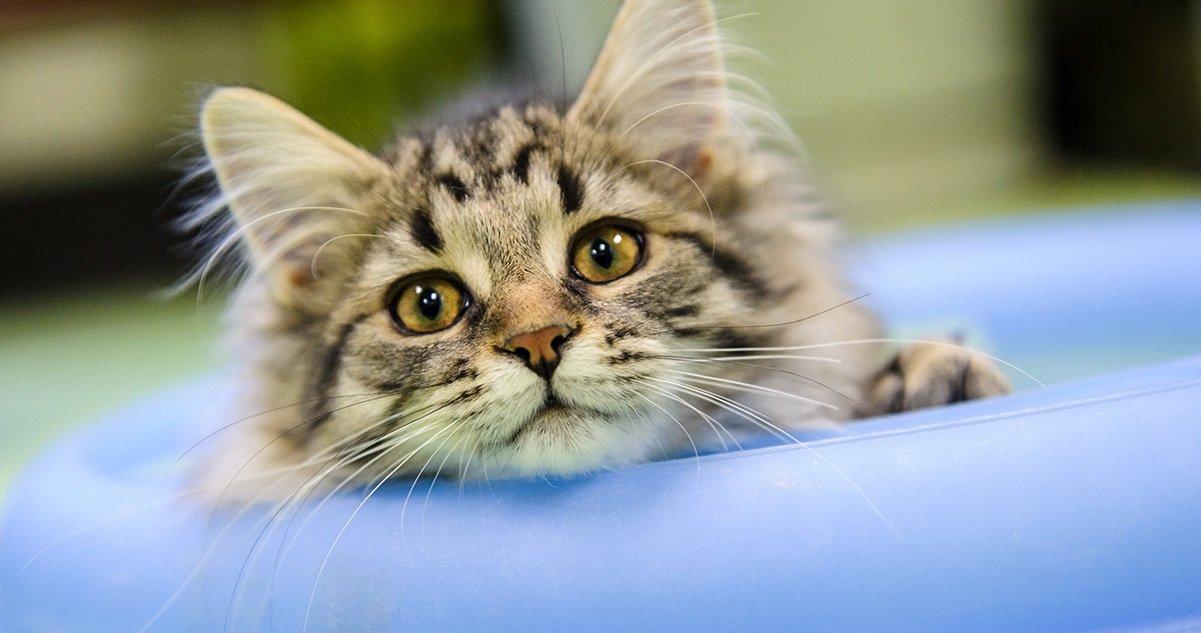 chat2.jpg?resize=412,232 - Ronron-thérapie: Quels sont les effets des chats sur notre santé ?