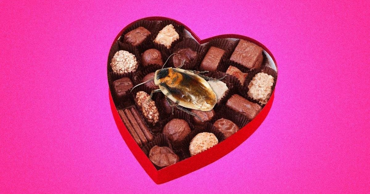 chocolate cockroach surprise e1581441724954.jpg?resize=412,232 - Saint-Valentin : Si le souvenir de votre ex vous donne le cafard, ce zoo a la parfaite solution pour vous !