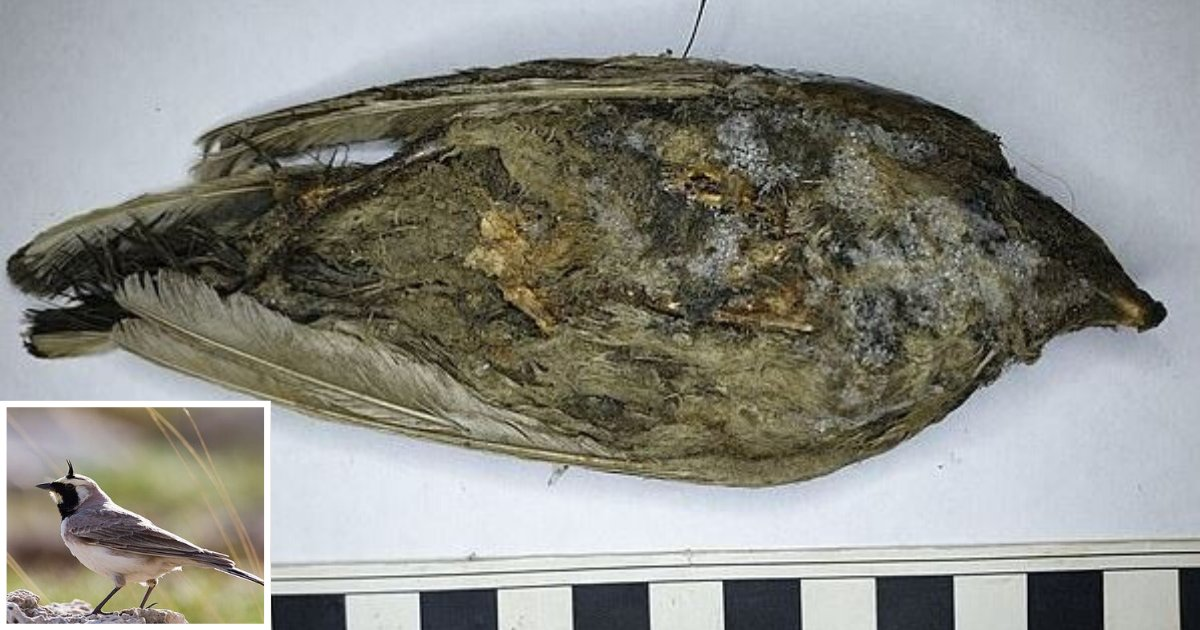 d2 6.png?resize=412,232 - This Frozen Bird Found Was Assumed to Have Died a Day Back But it was Actually 46,000 Years Old