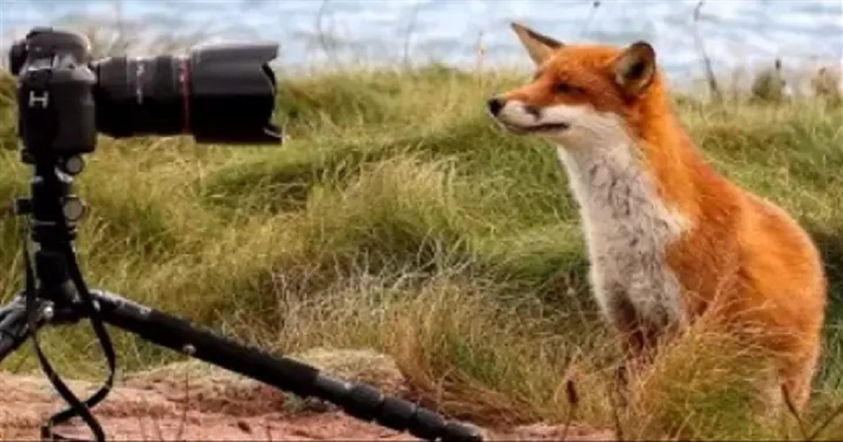 f3.jpg?resize=1200,630 - Two Photographers Became 'Foster' Parents To An Orphaned Fox