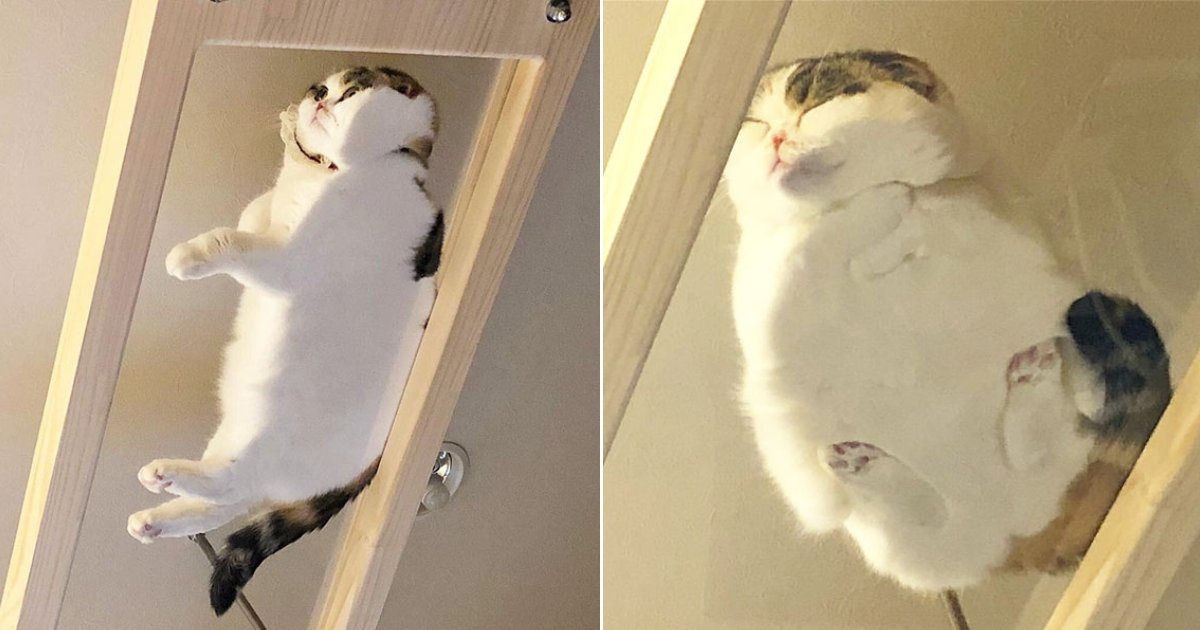 glass table cats.png?resize=412,232 - 30 Hilarious Photos Showing Why Glass Tables Are Perfect For Cats