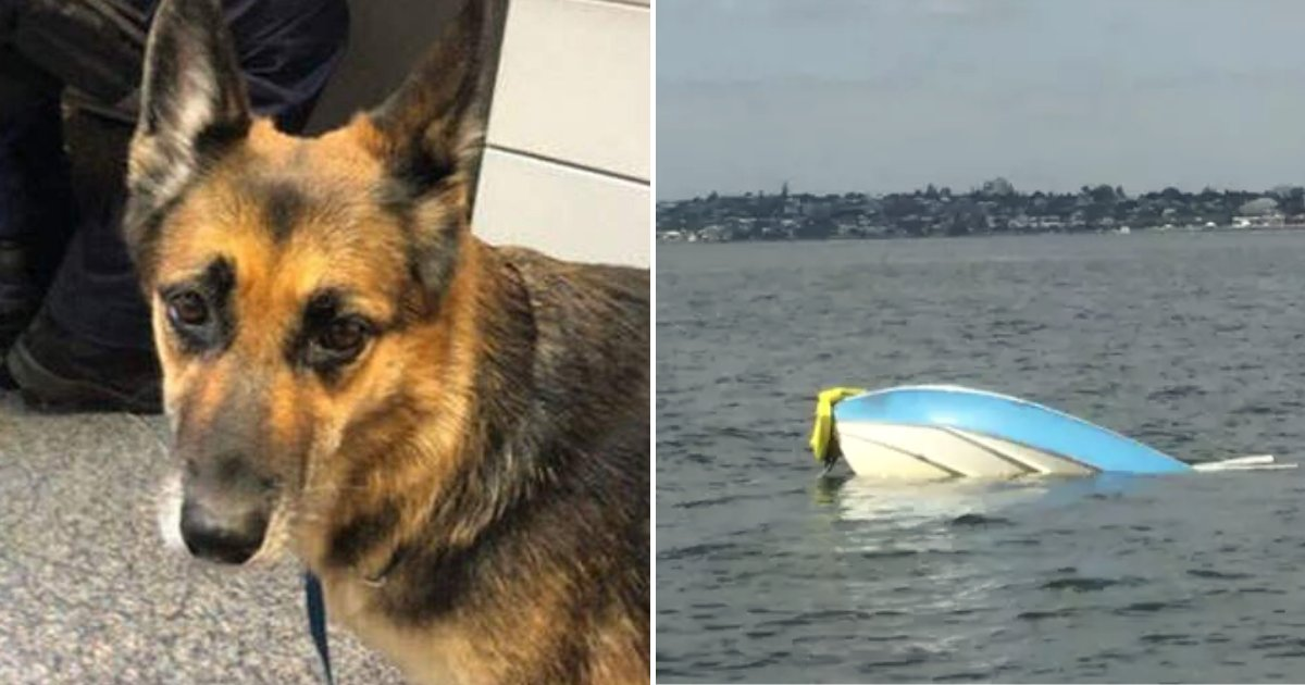 heidi5.png?resize=412,232 - Hero Dog Swam For 11 Hours In The Dark To Help Owner After Their Boat Capsized In Water
