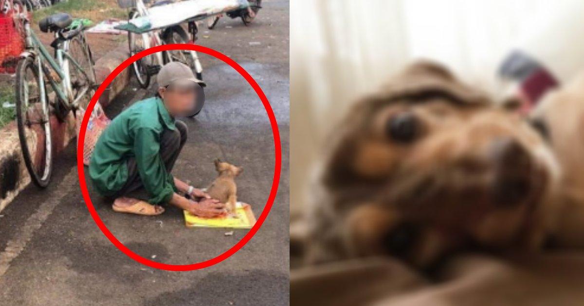 kaiinu.png?resize=1200,630 - 妻の薬代が払えず飼い犬を売ろうとするもいざとなると手放せない飼い主の姿に同情せざるをえない…
