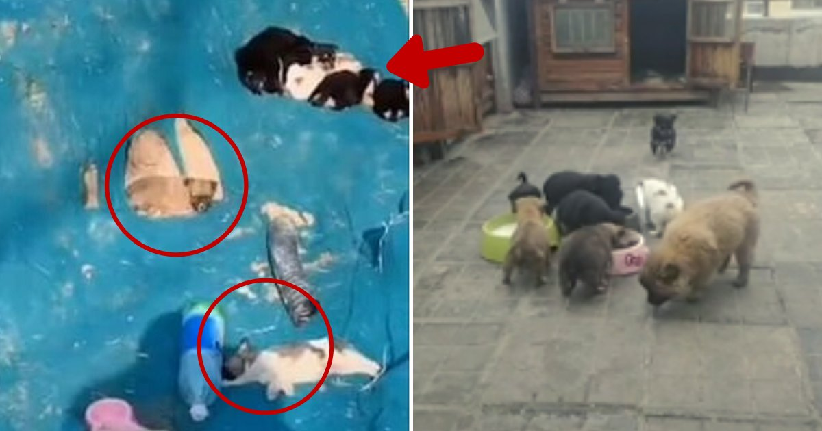 puppies6.png?resize=1200,630 - Many Owners Left Their Dogs On A Construction Site Amid Fears Of Coronavirus Spread
