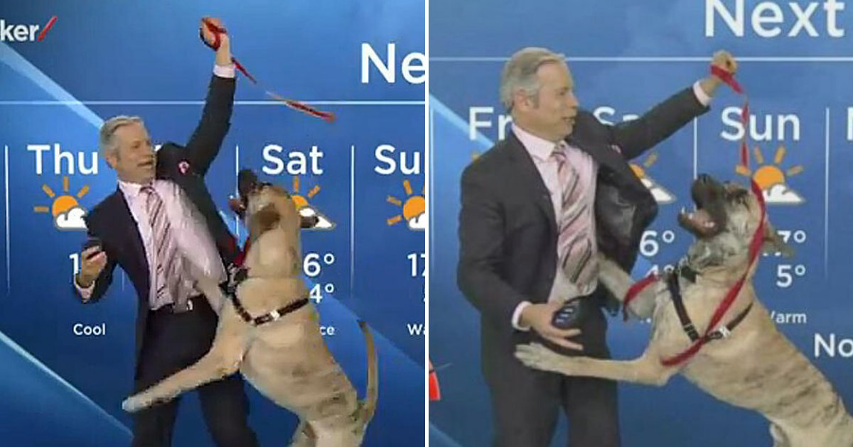 ripple6.png?resize=1200,630 - Playful Dog Refused To Let Weather Reporter Finish His Report And Tried To Play With Him During Live Broadcast
