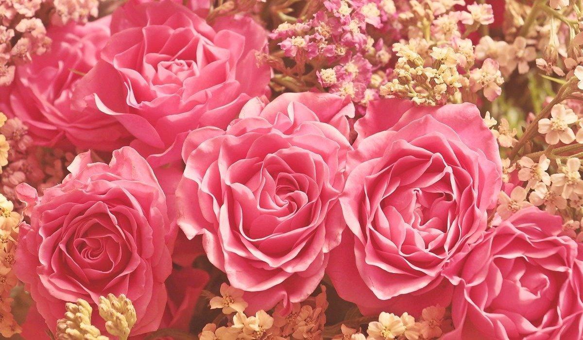 roses 3700010 1280 1 e1581384755462.jpg?resize=412,232 - Saint Valentin : On vous donne 11 idées de cadeaux pour profiter à deux!