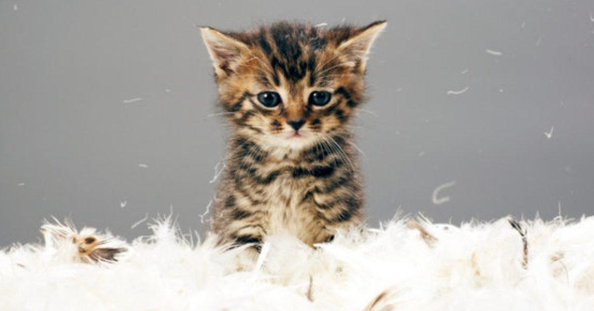 rsz 1thinkstockphotos 83454811 1280x720 e1582246897620.jpg?resize=412,232 - Vous êtes vous déjà demandé ce que le comportement de votre chat signifie ? Nous avons les réponses !