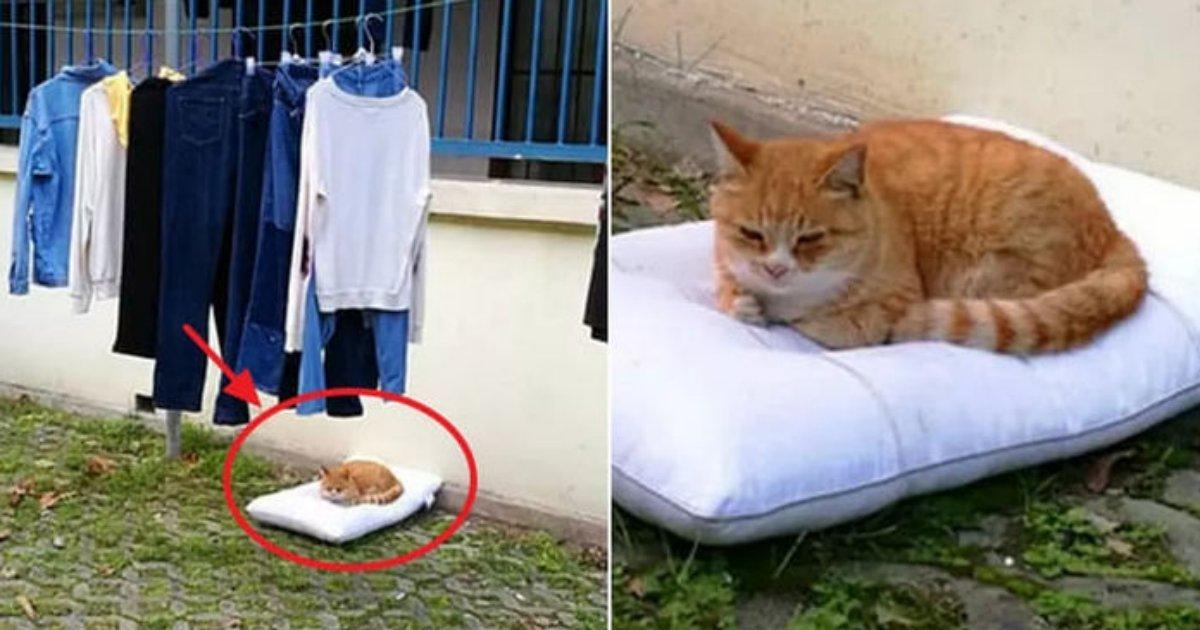 sentakumono.png?resize=412,232 - 洗濯物を取りに行った際に近くにうなだれている猫が干していた枕を占領していた件