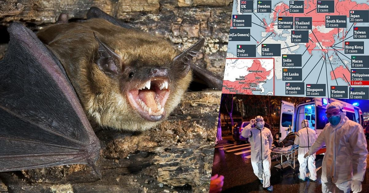 thumbnails.jpg?resize=412,275 - BREAKING NEWS: Scientists Confirm That Bats Are The Most Probable Source Of China's Coronavirus