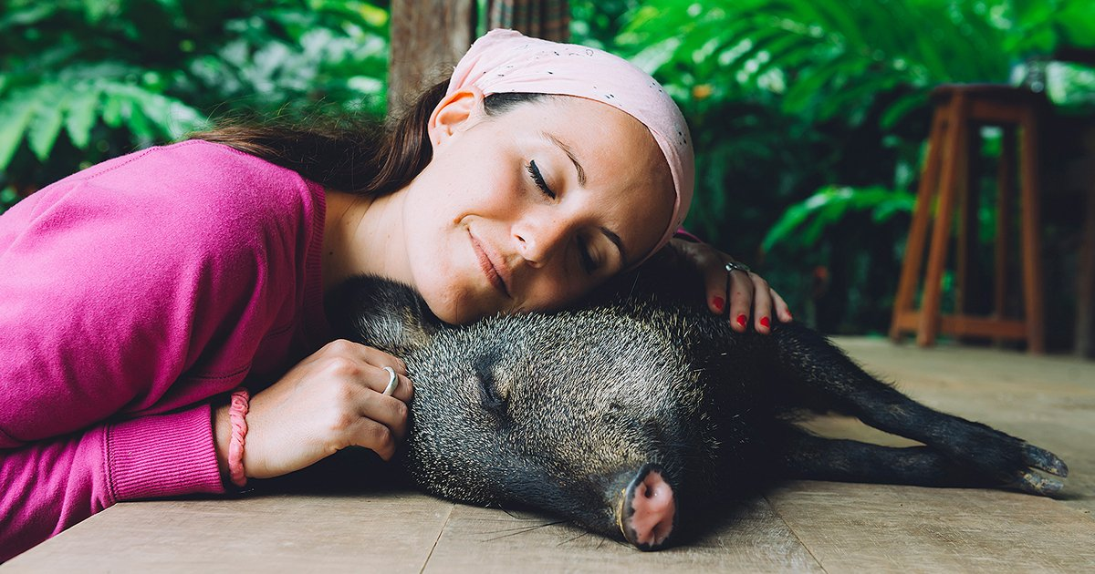 untitled 1 1.jpg?resize=1200,630 - A Farm Sanctuary Is Looking For New Members To Join 'Piggy Cuddler Team'