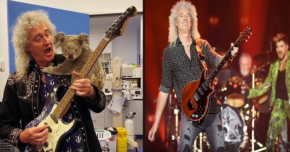 untitled 1 74.jpg?resize=412,232 - Queen's Brian May Shared 'Sweet Moment' With Koala Before Performing At Australia Bushfire Relief Concert