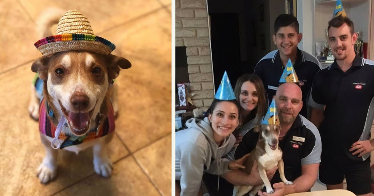 untitled 1 79.jpg?resize=412,232 - Family Threw A Surprise Birthday Party For Its 13-Year-Old Senior Dog