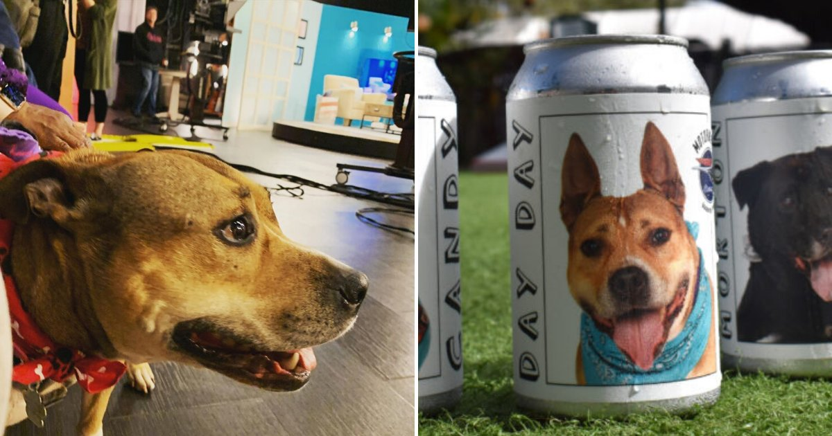 untitled design 15.png?resize=1200,630 - Woman Reunited With Her Lost Dog After Spotting Her Picture On A Beer Can