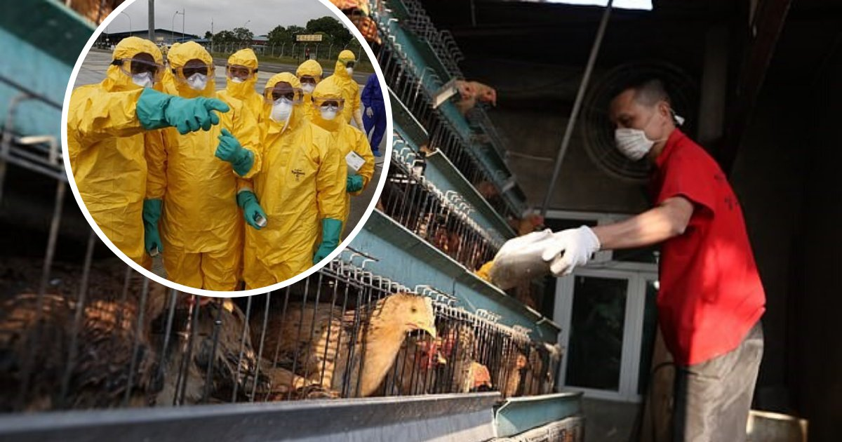 untitled design 21.png?resize=1200,630 - China Struck By Deadly H5N1 Bird Flu Outbreak Amid Novel Coronavirus Epidemic