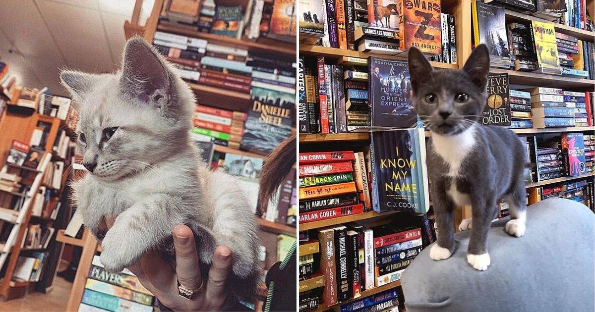 untitled design 4.png?resize=1200,630 - Un livre, un café et ... Un chaton ? Voici une libraire unique en son genre !
