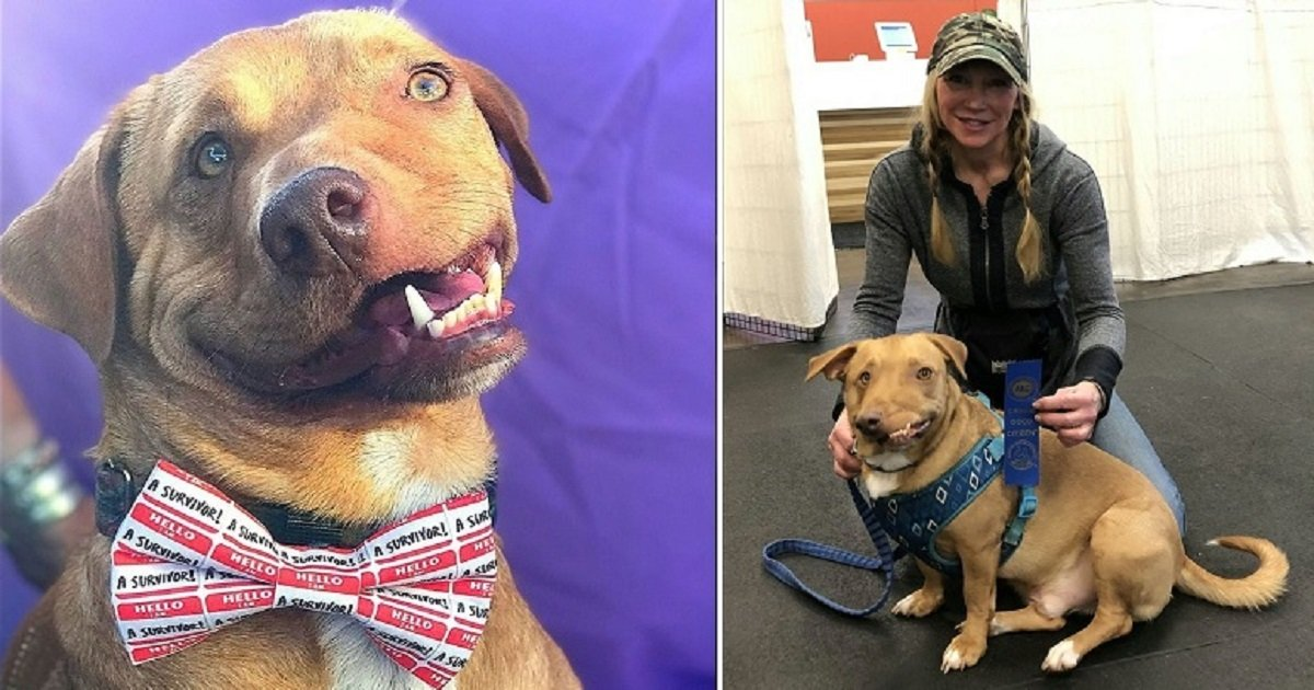 """w3 3.jpg?resize=300,169 - The Wonky-Faced Dog Is Thriving In His Forever Home And Owner Explained He's """"Perfectly Imperfect"""""""