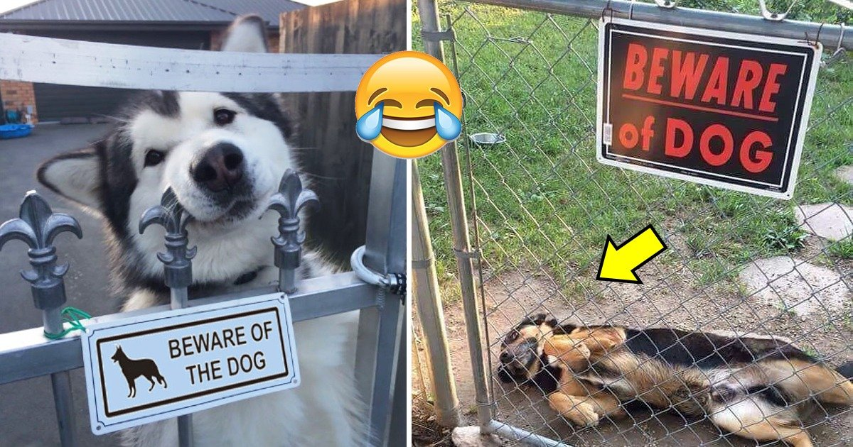 """whatsapp image 2020 02 03 at 7 13 55 am.jpeg?resize=412,232 - 30 Dangerous Dogs Behind The Sign """"Beware of Dogs"""""""