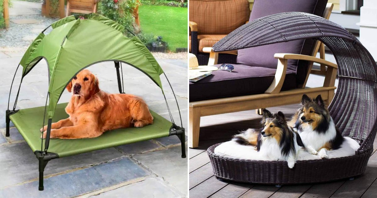 1 22.png?resize=412,275 - B&M Has Launched a New Sun Lounger for Dogs and it Even Has a Roof