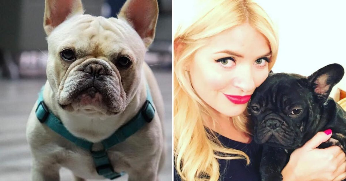 12.png?resize=412,232 - Three French Bulldog Puppies Were Stolen Overnight From A Manchester Home