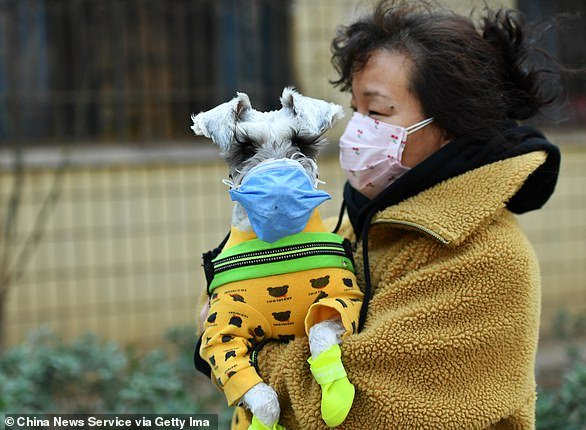 A woman with her pet dog, both wearing face masks, walks on street amid novel coronavirus spread