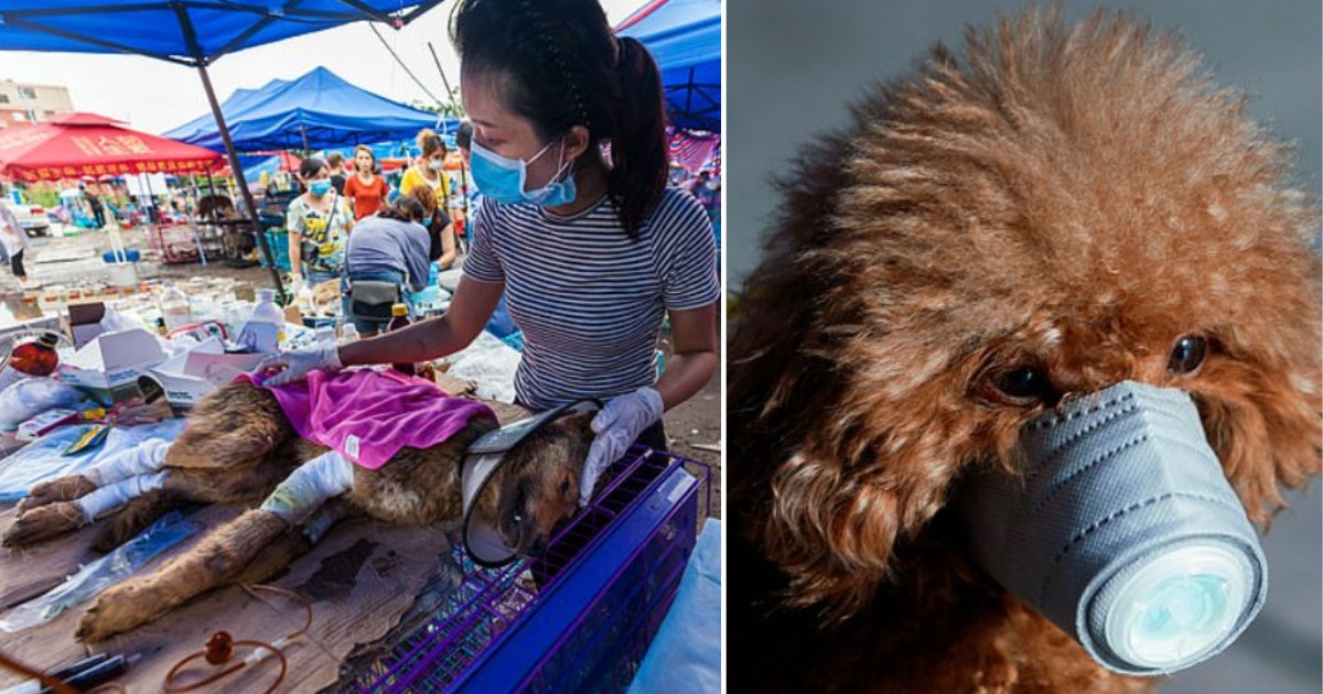 2 42.png?resize=1200,630 - Chinese Authorities Announced to Reward People for Taking the Life of Stray Dogs