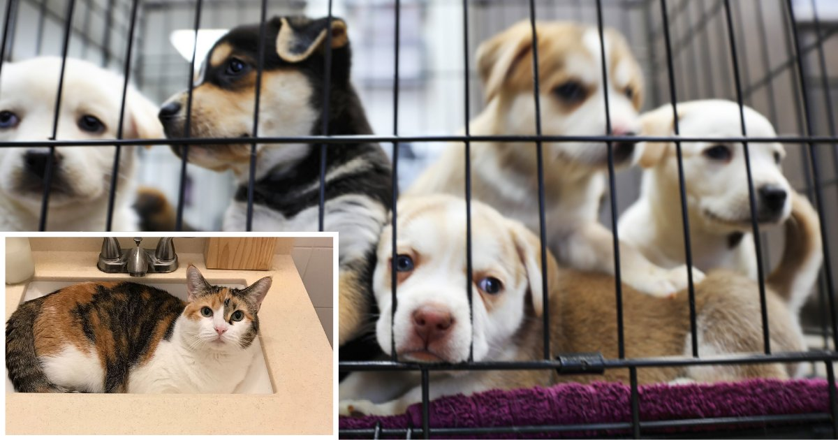 4 35.png?resize=412,232 - Animal Shelter Suggests Self-Isolating With a Foster Animal