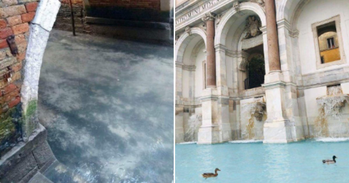 4 46.png?resize=412,232 - Venice Residents Get Delighted To See Crystal Clear Canals With Fish During Covid-19 Lockdown