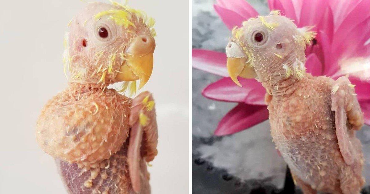 4 5.jpg?resize=1200,630 - Ce perroquet sans plume a finalement trouvé une famille d'accueil