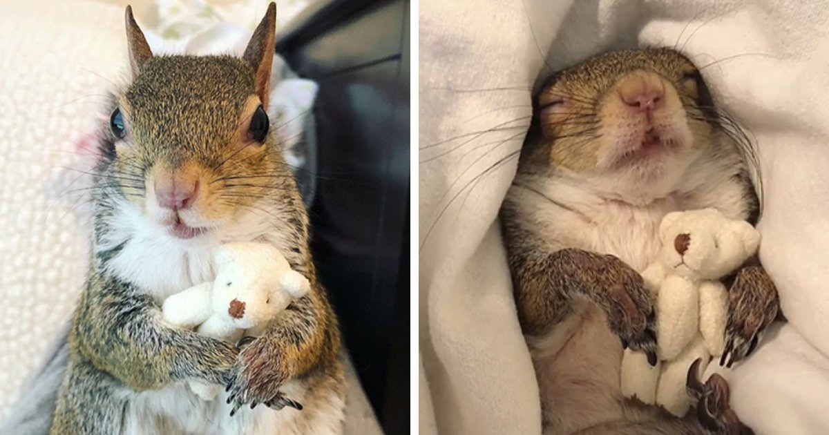 4 56.png?resize=412,232 - A Squirrel Rescued From A Hurricane Is Deeply In Love With Her Tiny Teddy Bear