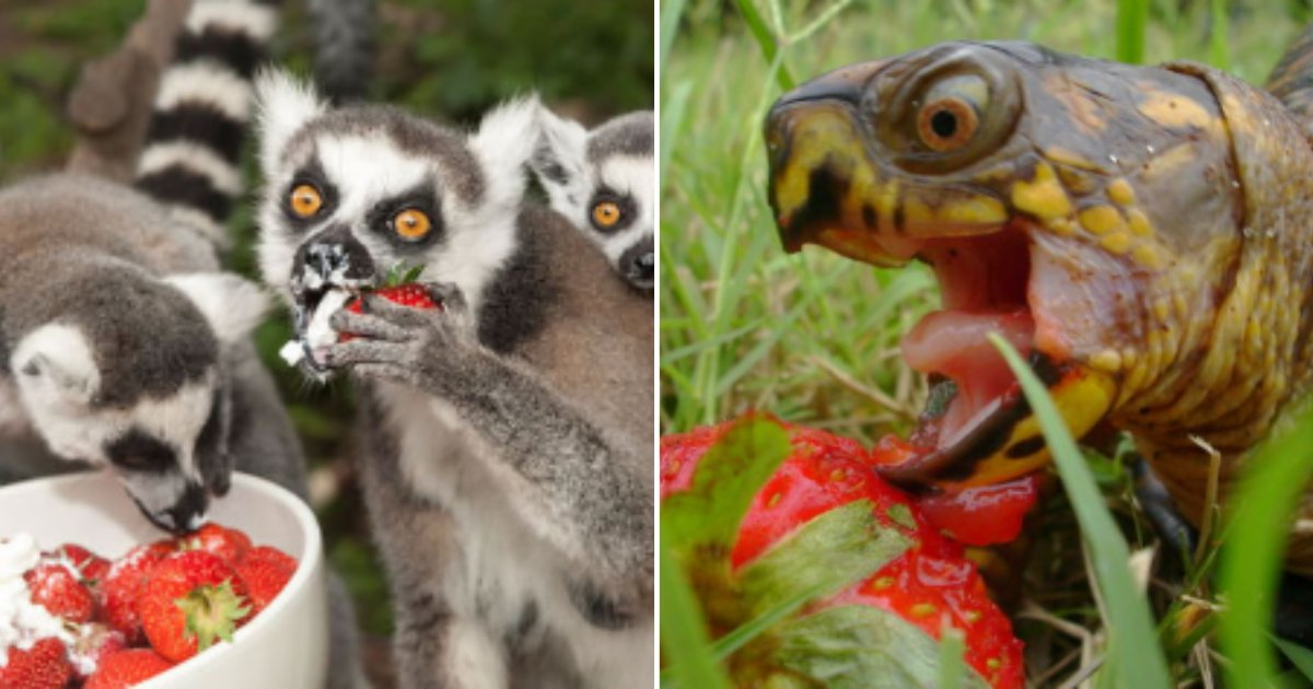 5 43.png?resize=412,232 - These 20 Adorable Animals Look No Less Than Monsters While Eating Berries