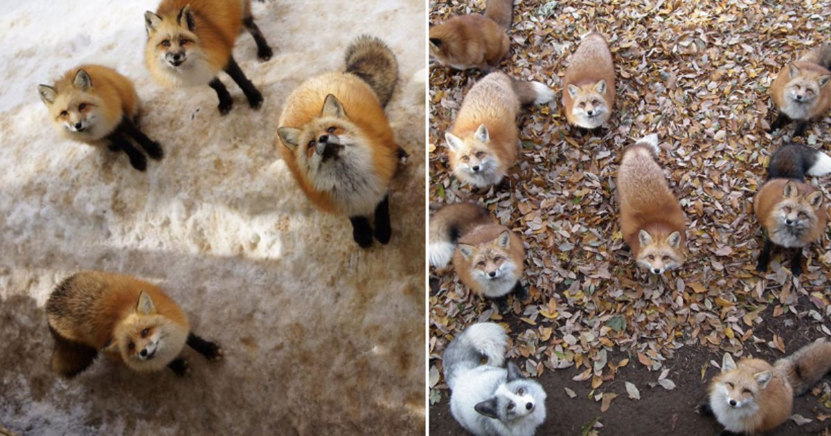 6 43.png?resize=412,232 - This Fox Village in Japan is The Heaven On Earth