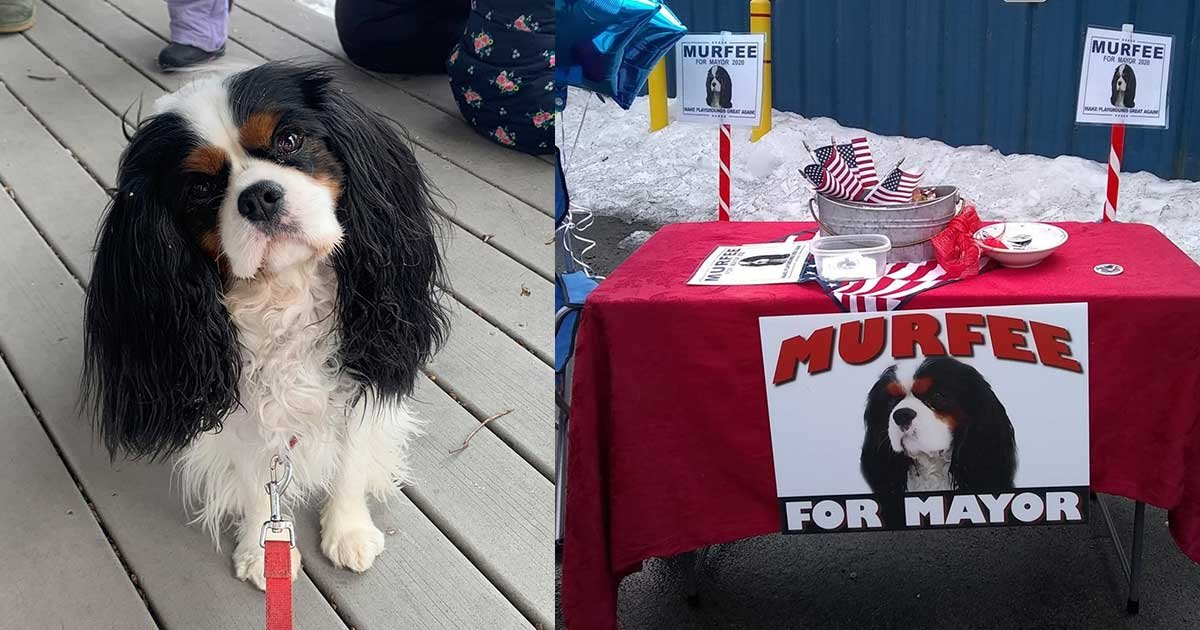 66.jpg?resize=412,232 - Therapy Dog Wins Vermont Mayoral Race