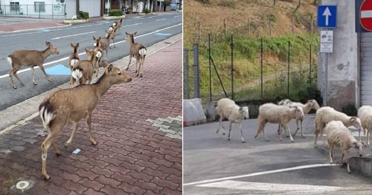 a3 1.jpg?resize=412,232 - As People Stay Inside Their Homes, Animals Are Fearlessly Wandering The Streets