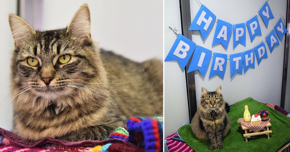 cat birthday no one showed up fiv.jpg?resize=412,275 - Animal Shelter Threw The Loneliest Cat A Birthday Party Hoping She Would Get A Forever Home But No One Showed Up