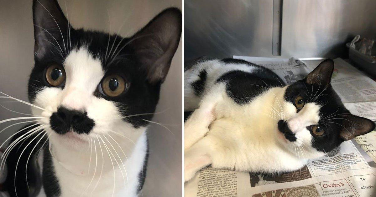 cat looks like adolf hitler.jpg?resize=412,232 - Cat That Looks Like Adolf Hitler Broke Both Its Legs And Is Now Finding A Forever Home
