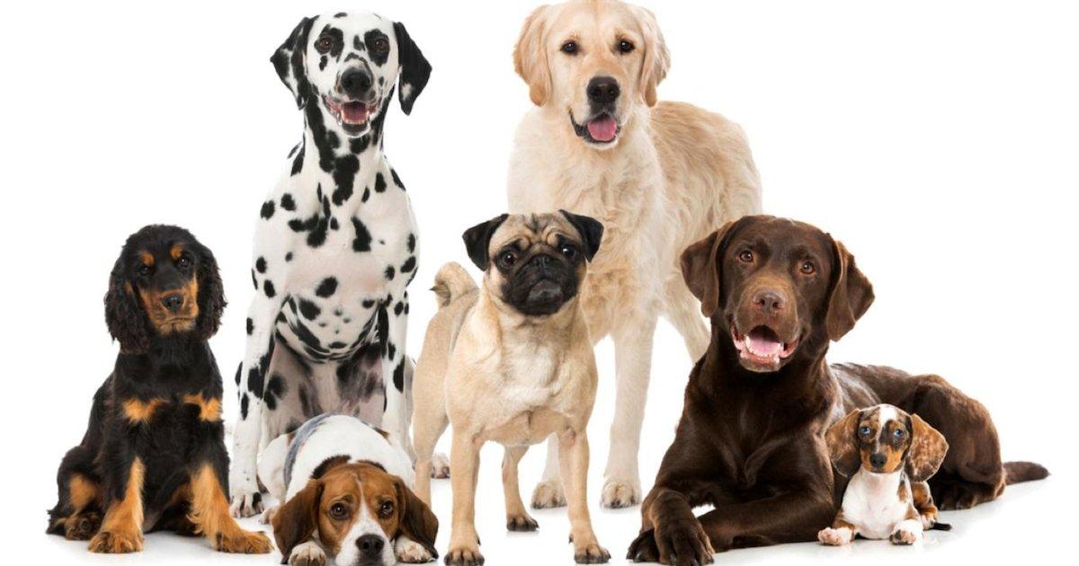 chiens.png?resize=1200,630 - Voici à quelle race de chien correspond votre signe astrologique