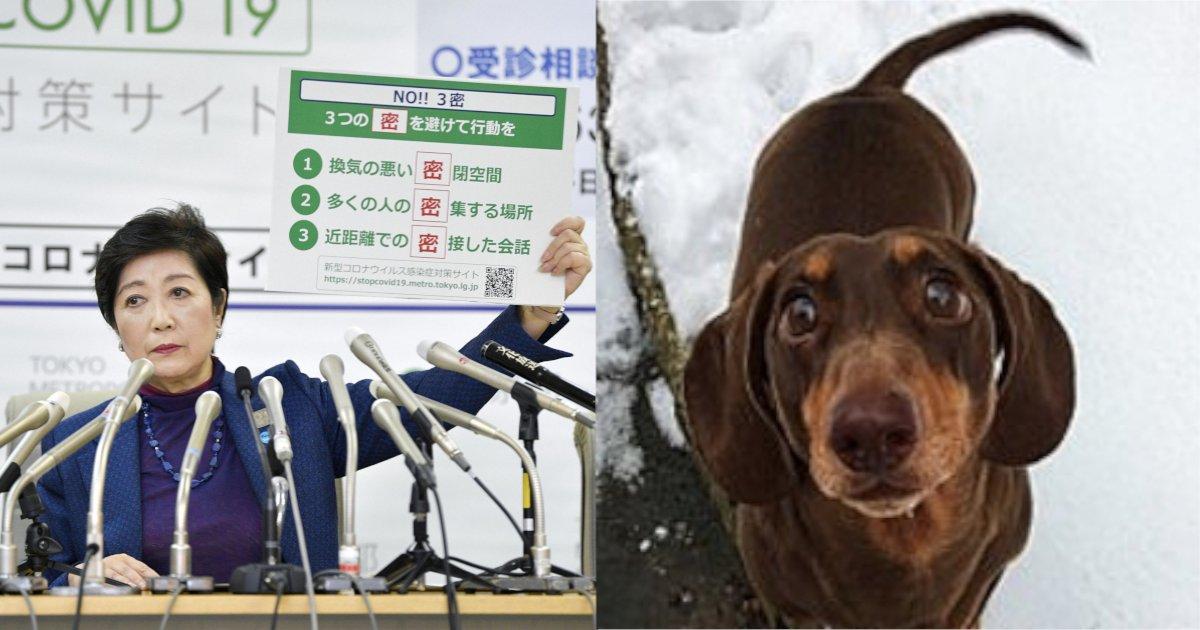 corona 6.png?resize=412,232 - 【ほっこり】新型コロナで自宅待機を余儀なくされストレスを感じる中、愛犬が尻尾をねんざ⁈ その理由とは⁈
