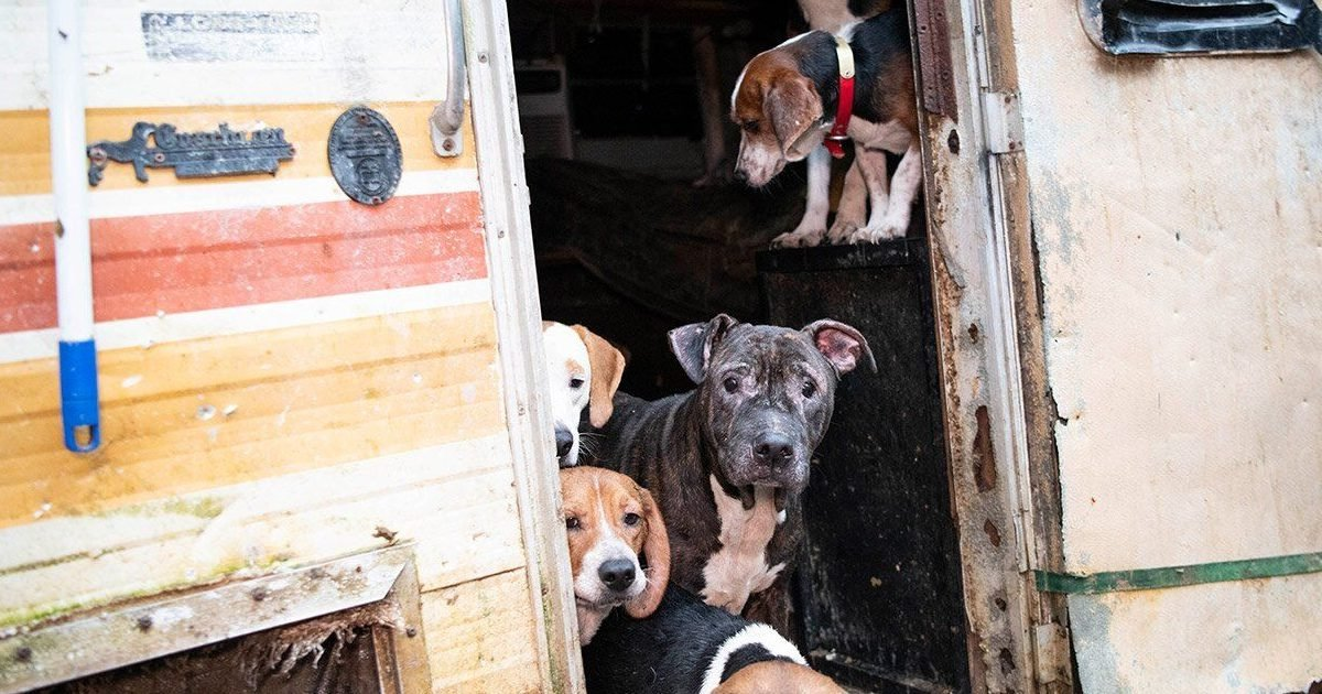 dog e1583133672693.jpg?resize=412,232 - Humane Society Rescued 140 Dogs In Neglect Situation From A Residential Property In Florida