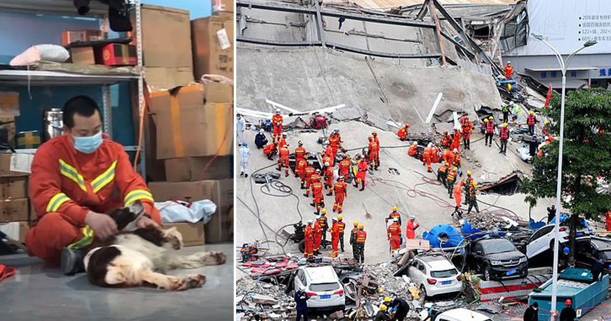 dog saved six people quarantine hotel china.jpg?resize=1200,630 - Six-year-old Rescue Dog Saved Six People Trapped In A Collapsed Quarantine Hotel In China
