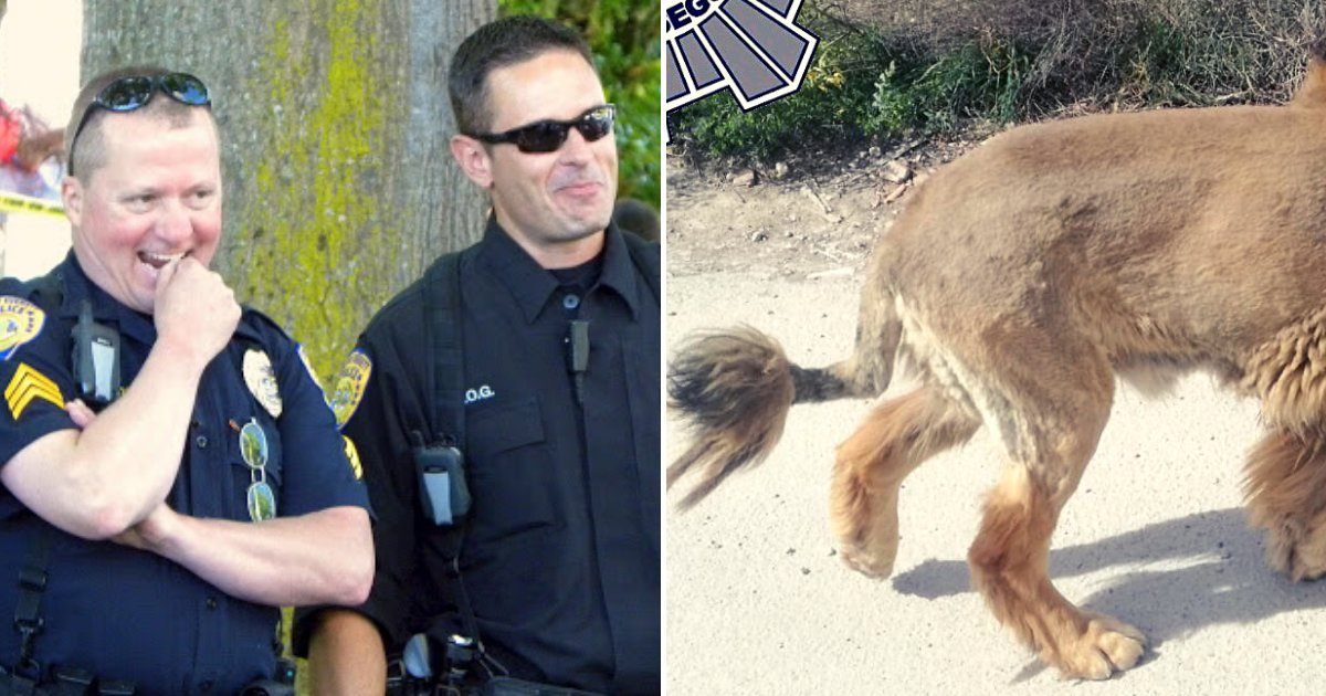 doggy3.png?resize=412,232 - Police Received Numerous Reports Of A Loose Lion, Found Out It Was Just An Oddly-Shaven Dog