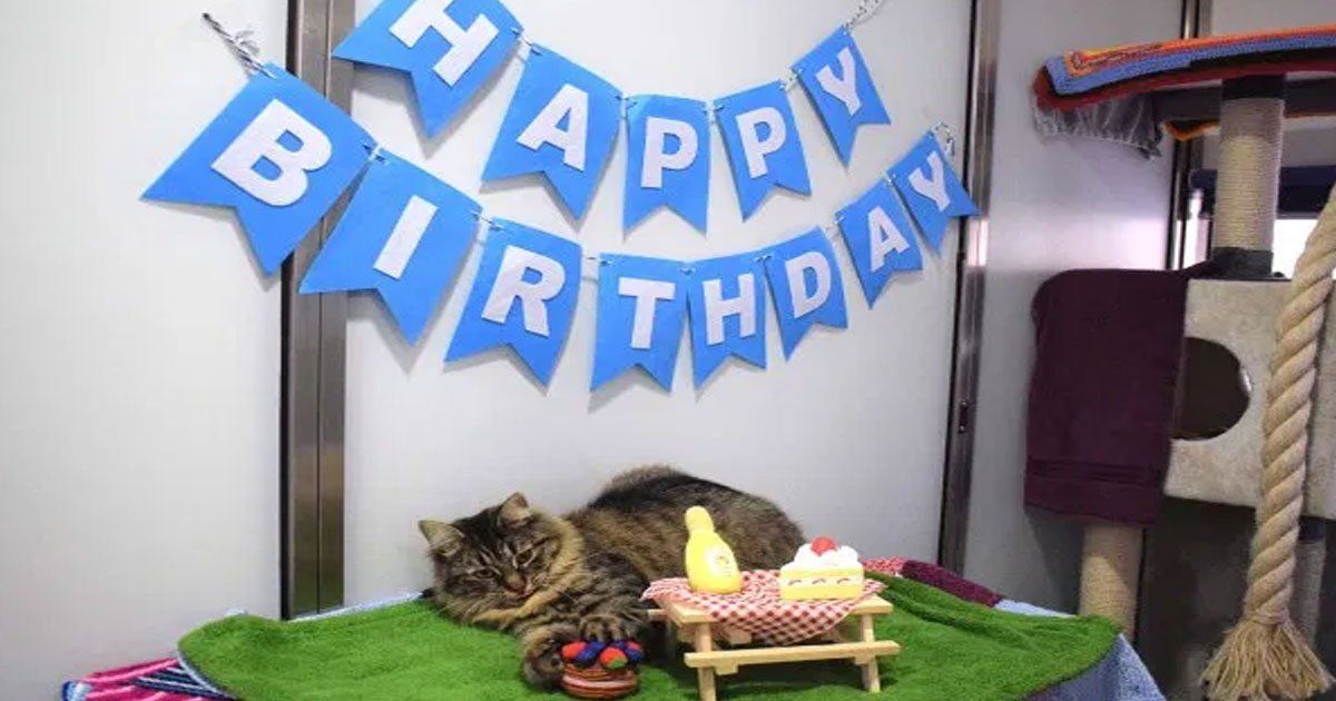 lonely cat monique looking for a forever home as no one showed up to her birthday party.jpg?resize=412,232 - Cat Monique Looking For A Forever Home As No One Showed Up To Her Birthday Party