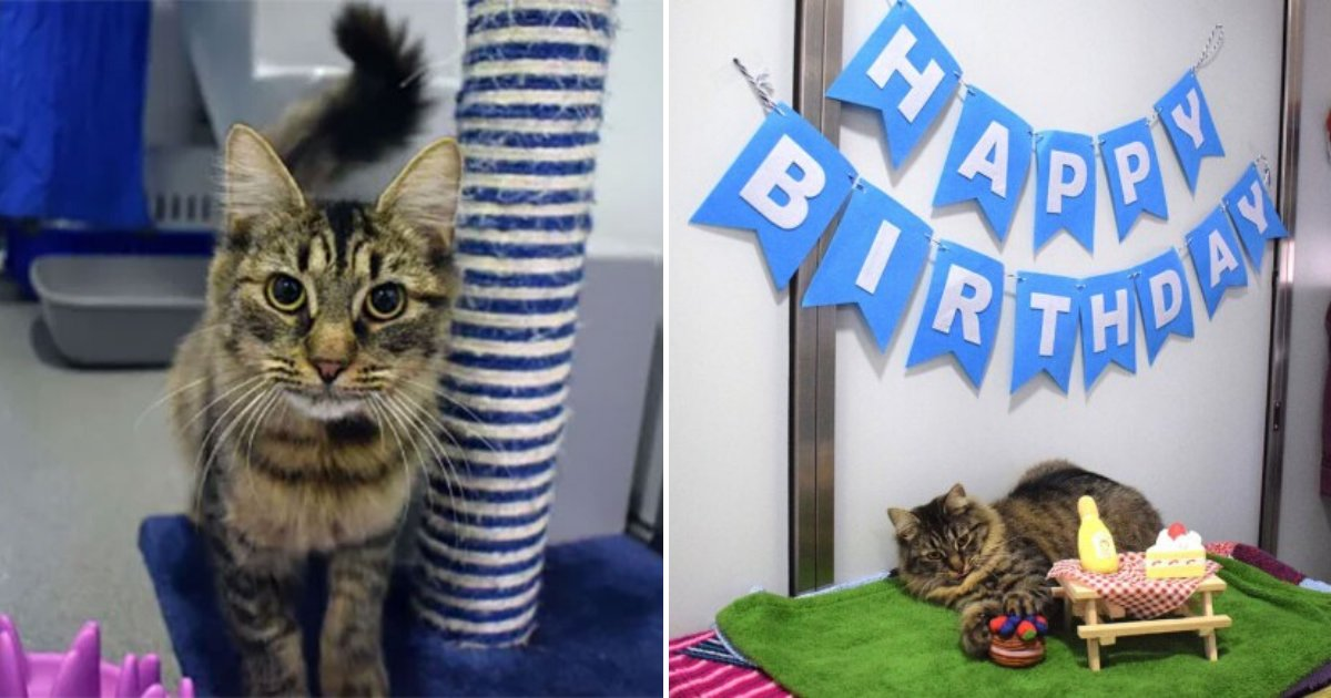 monique6.png?resize=1200,630 - Cat Feels Unloved And Lonely After Nobody Turned Up To Her Birthday Party