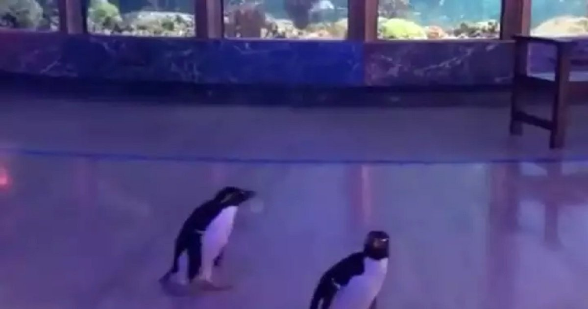 p3 8.jpg?resize=1200,630 - Penguins Roamed Freely Around The Closed Aquarium