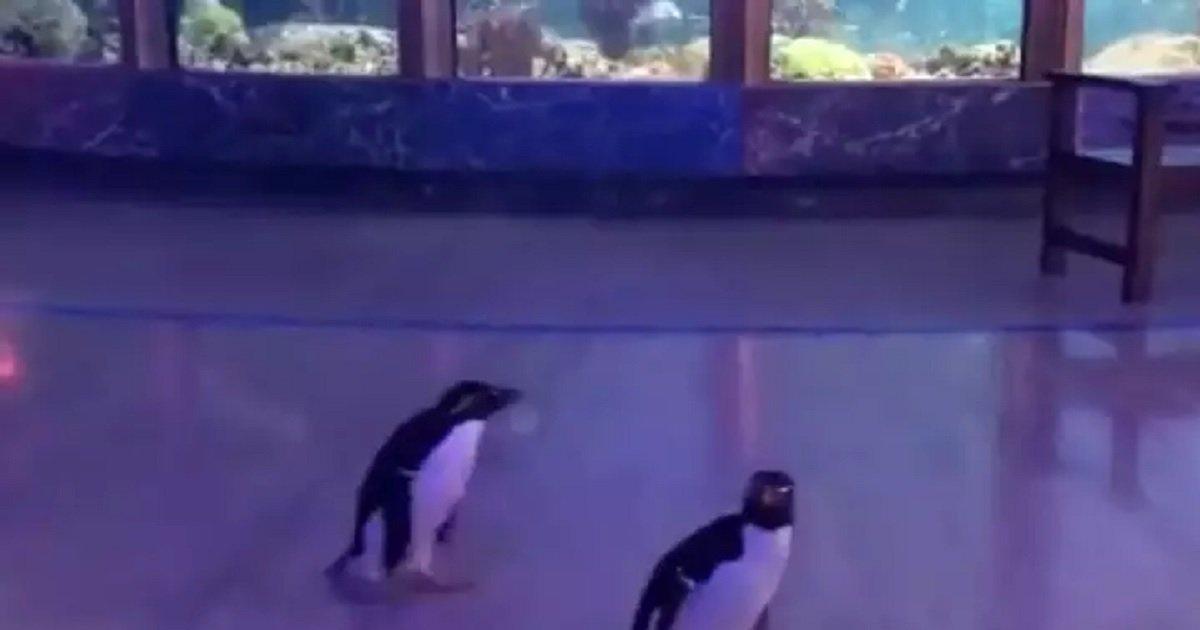 p3 8.jpg?resize=412,232 - Penguins Roamed Freely Around The Closed Aquarium