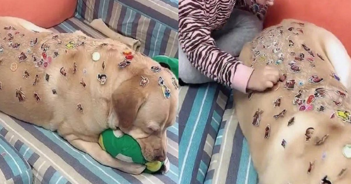 sticker.png?resize=412,232 - 子どもが犬にイタズラ?大量のシールを貼られるも目をつぶり必死に我慢する飼い犬がかわいそう…