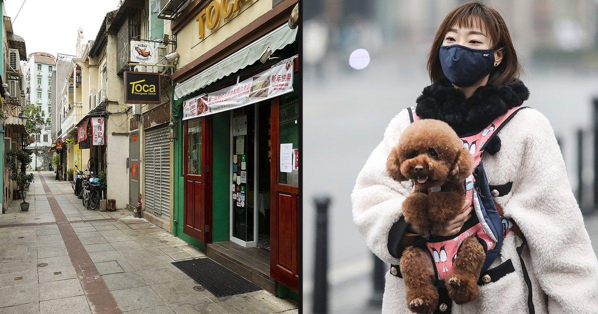 untitled 1 11.jpg?resize=412,232 - Volunteers Checking Door To Door To Rescue Pets Left Behind During The Coronavirus Outbreak In Wuhan