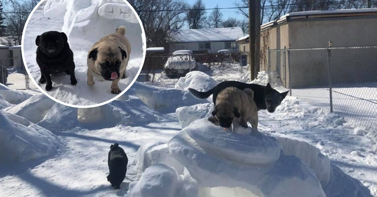 untitled design 21 1.png?resize=1200,630 - Man Built A Winter Park For His Dogs During The Cold Season