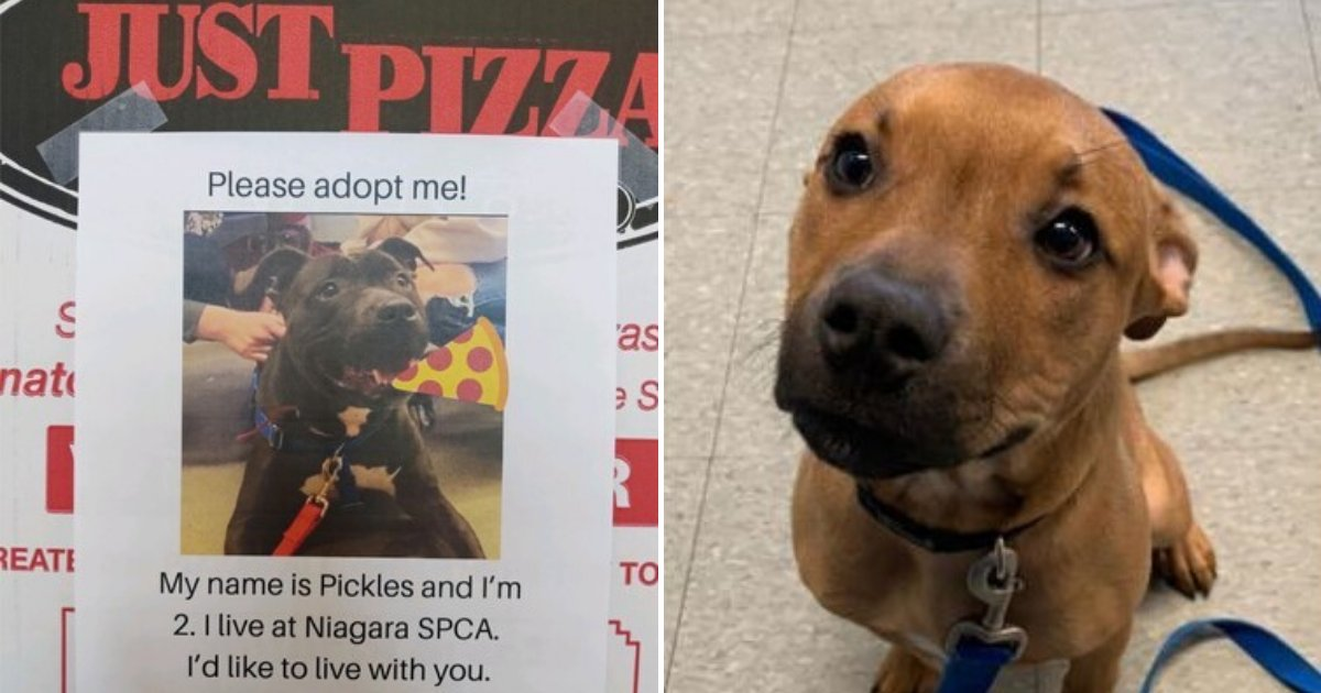 untitled design 23.png?resize=412,232 - Pizza Shop Placing Pictures Of Shelter Dogs On Pizza Boxes To Encourage People To Adopt Them